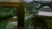 Torino-10-2014_50